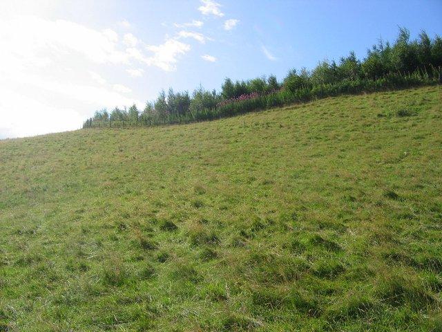 Field beside the Easton Burn.
