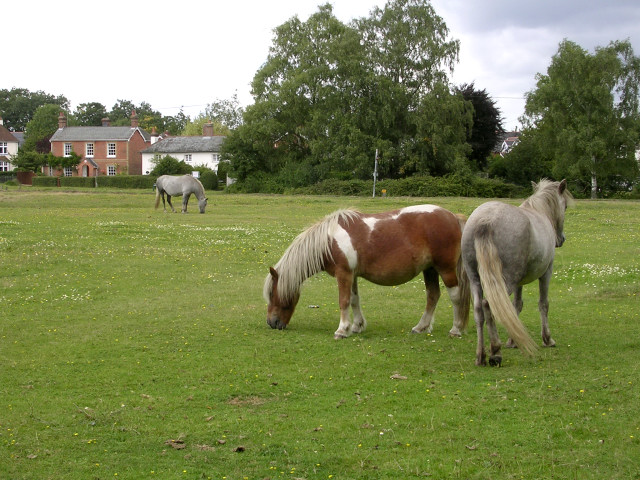 New Forest ponies grazing on Waters Green, Brockenhurst