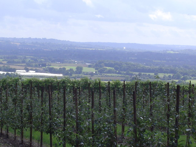 Orchards at Boughton Monchelsea Place