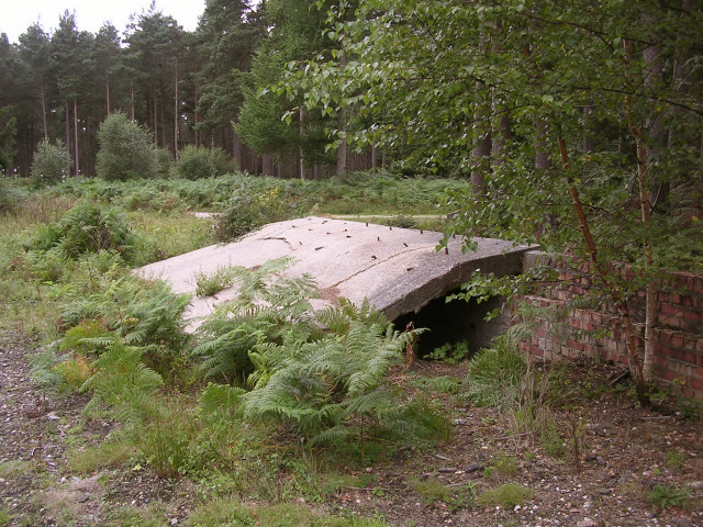 Remains of military stores in the Hawkhill Inclosure, New Forest