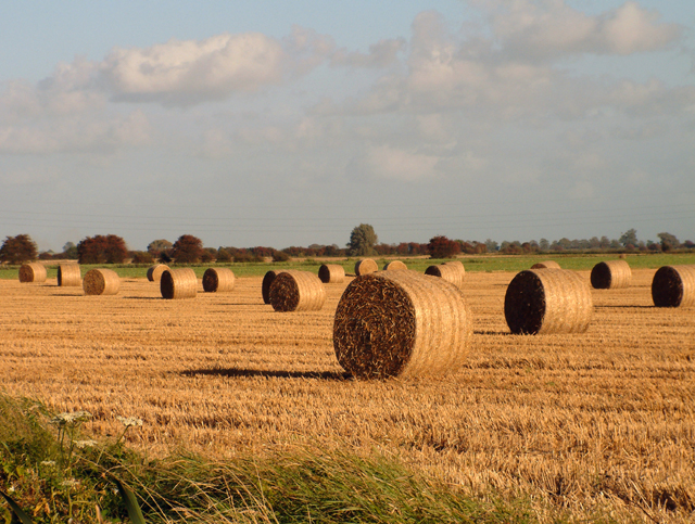 Harvest time on the Rother Levels