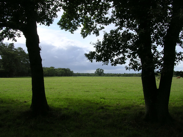 Field northeast of Hilltop House, Beaulieu, New Forest