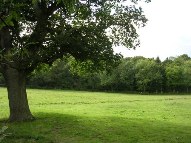 Hilltop Wood, Beaulieu, New Forest