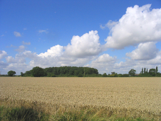 Wheatfield and Woods, near Cransford, Suffolk