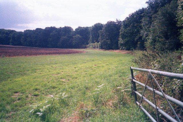 Edge of field within Wychwood Forest