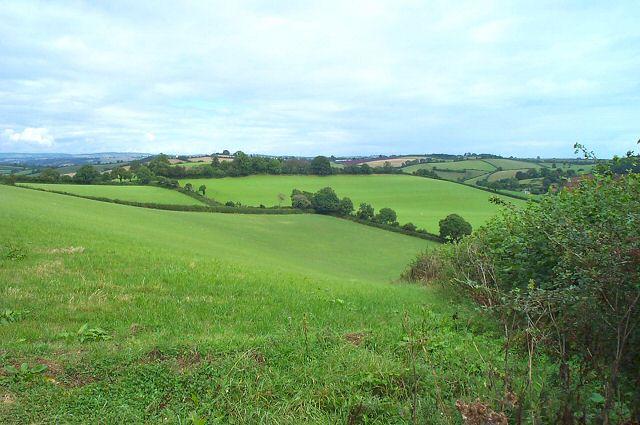 Fields near Marldon - South Devon