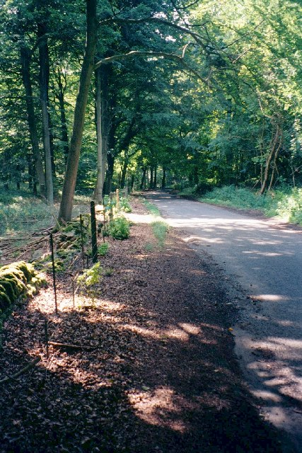 Road through Wychwood Forest