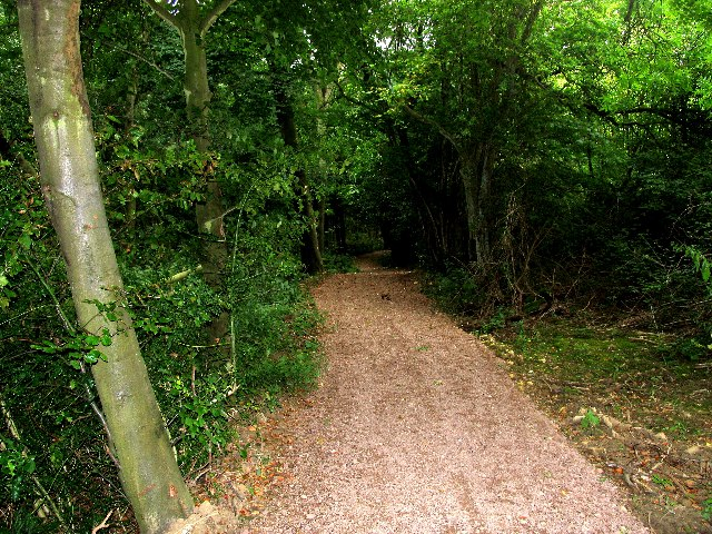 Cotswold Way, Dowdeswell Woods