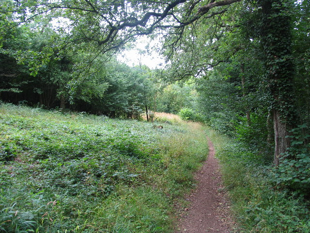 Cotswold Way, Lineover Woods