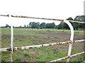 SJ4366 : Littleton Pasture by Dennis Turner