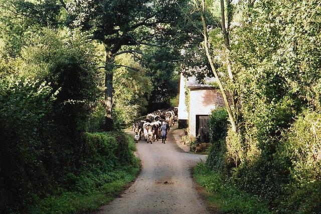 Payhembury: Lower Tale