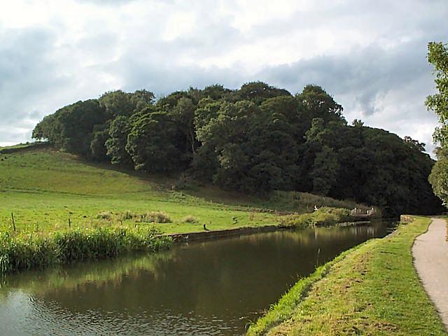 Lodge Wood near Calverley