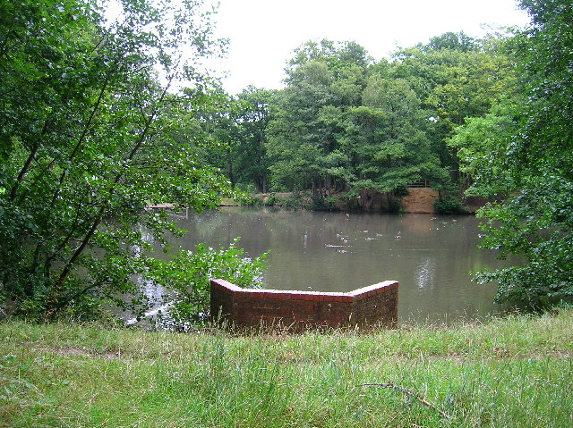 Ducks on Crawley Down Pond