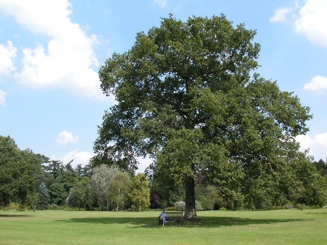 Queen Victoria's Oak Tree, Sandringham:: OS grid TF6928 ...