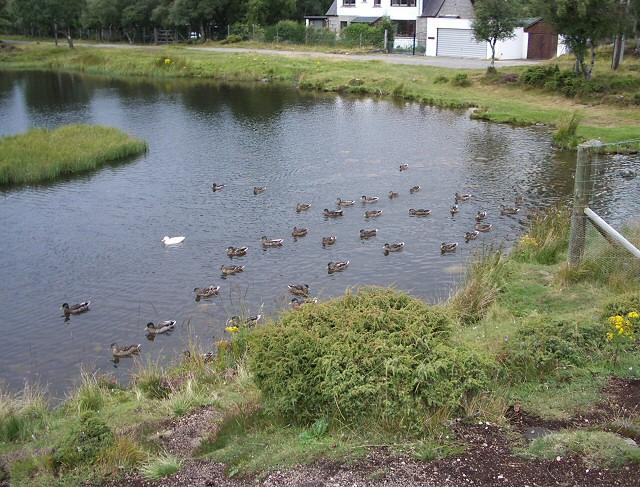 Braemar duck pond