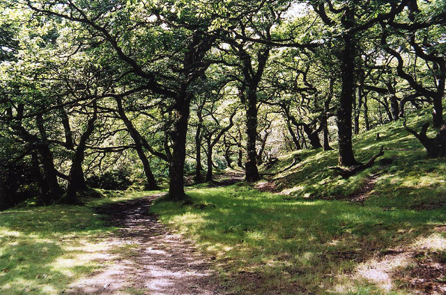 Brendon: Badgworthy Wood