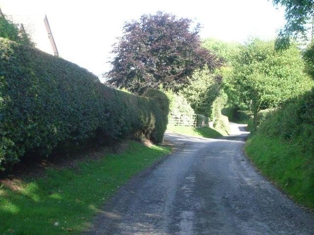 The lane between Stapleton and Lower Kinsham