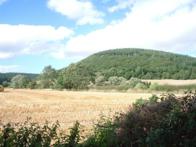 Fields north of the lane between Stapleton and Lower Kinsham