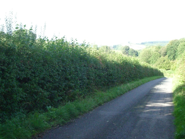 The lane near Willey Lodge