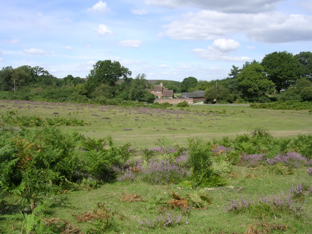 Appleslade Bottom, New Forest