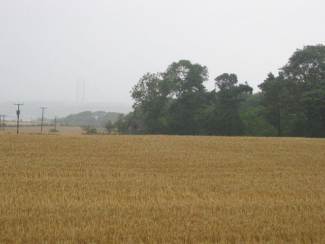 Wheatfield, Westfield Farm.