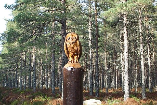 Glenmore Owl