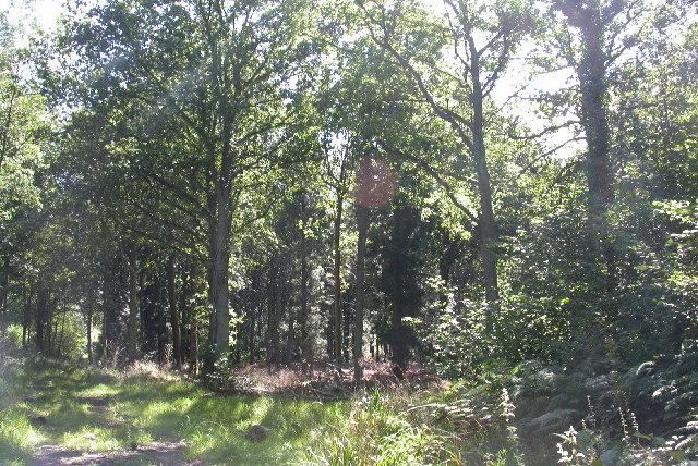 Kingspark Wood