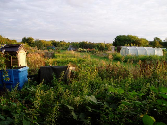 Allotments off Perne Road