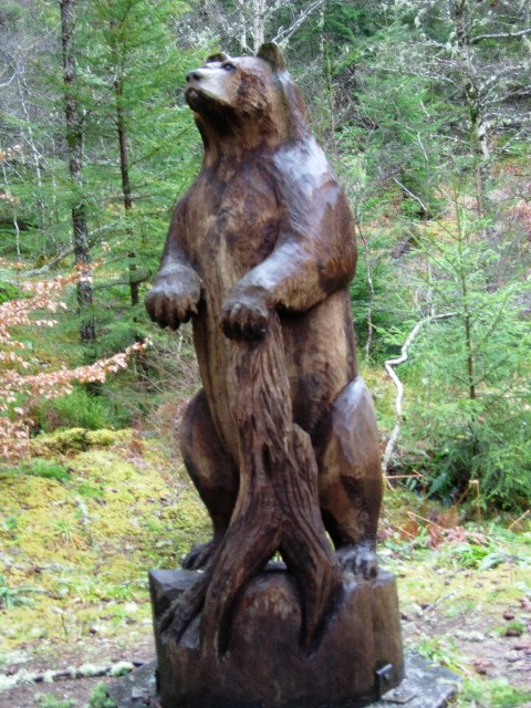 the bear in the woods