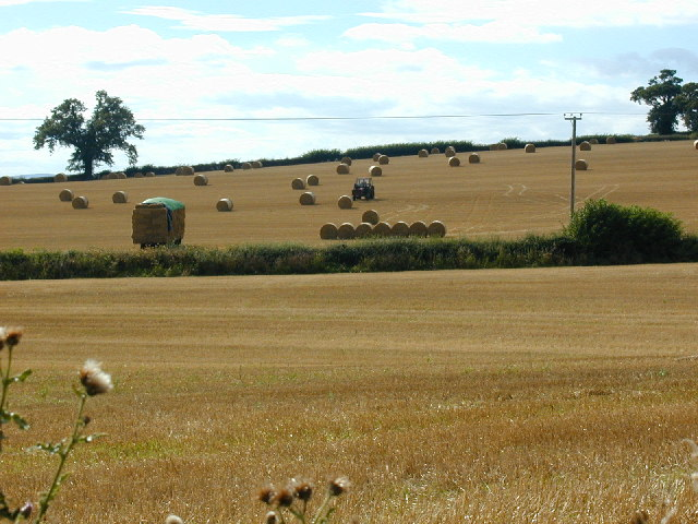 Moving straw bales at Eaton Constantine using tractor