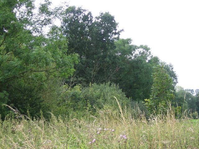 Mill Plantation