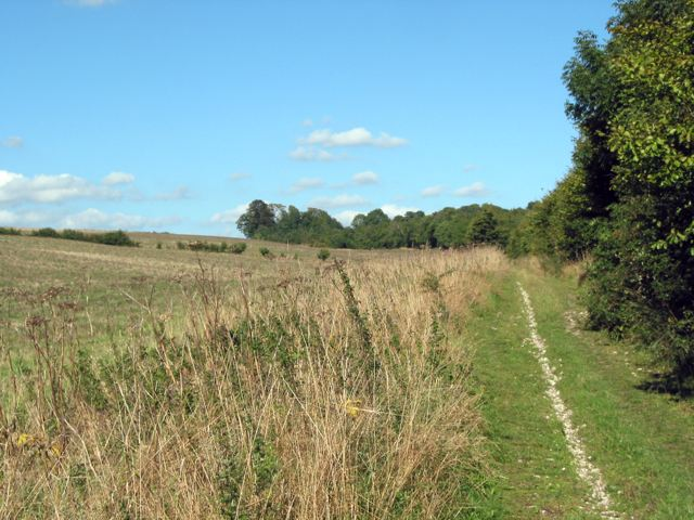 Track running from Twyford Down towards Chilcomb