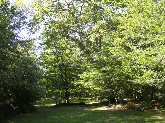 Stubbs Wood adjacent to the Hawkhill Inclosure, New Forest