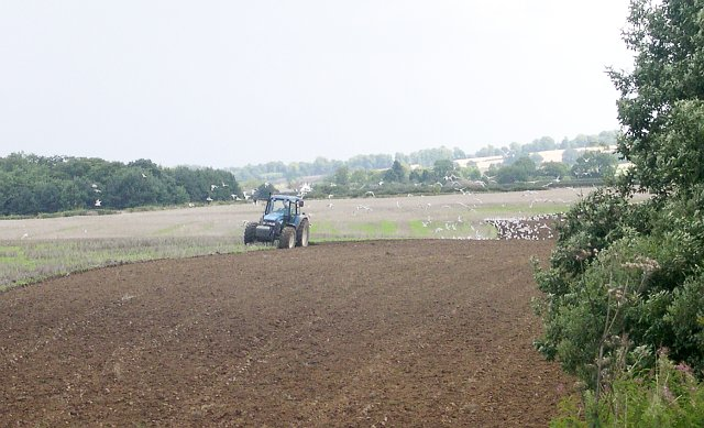 Seagulls following the plough near Salmonby Carr
