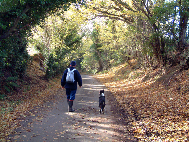 Sunken lane in Autumn