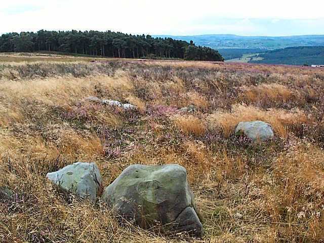 Cup marked rock, Bingley Moor