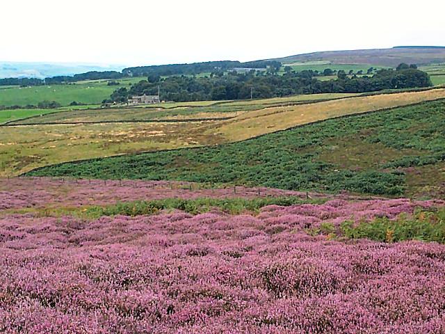 Sunny Dale, Bingley Moor