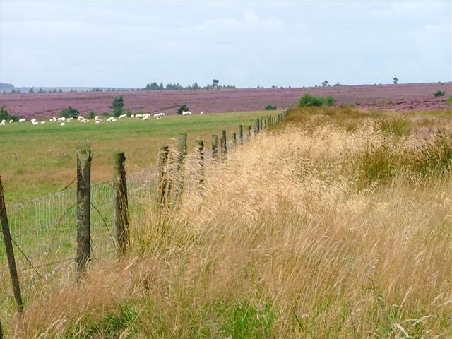 Fence, Helmsley Moor