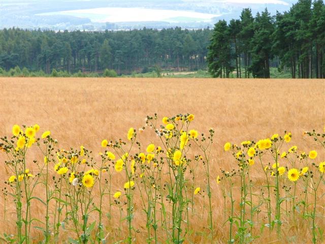 Farmland, near Carlton Grange Farm