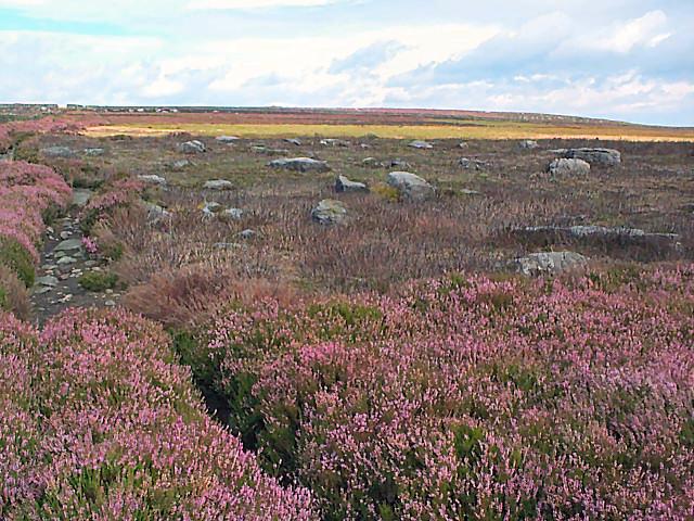Boulder field on Rombalds Moor