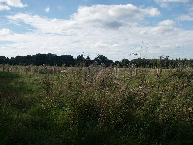 New plantation, East Carleton