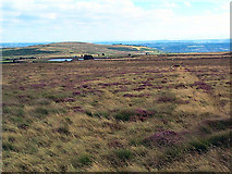 SE1342 : Weecher Brow, Hawksworth Moor by David Spencer