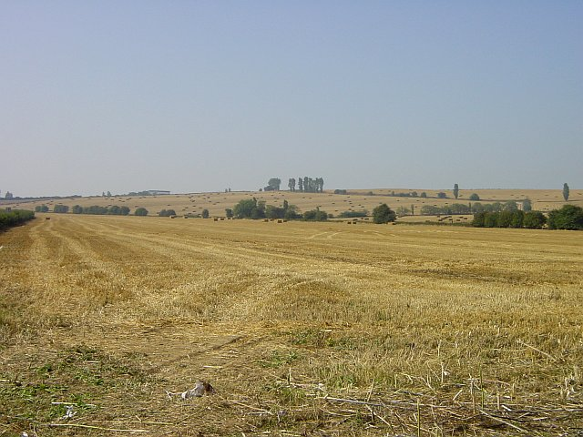 Harvest home near Eastchurch