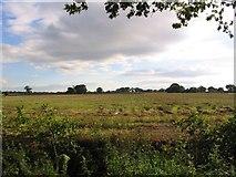SJ7283 : Farmland by Dave Smethurst