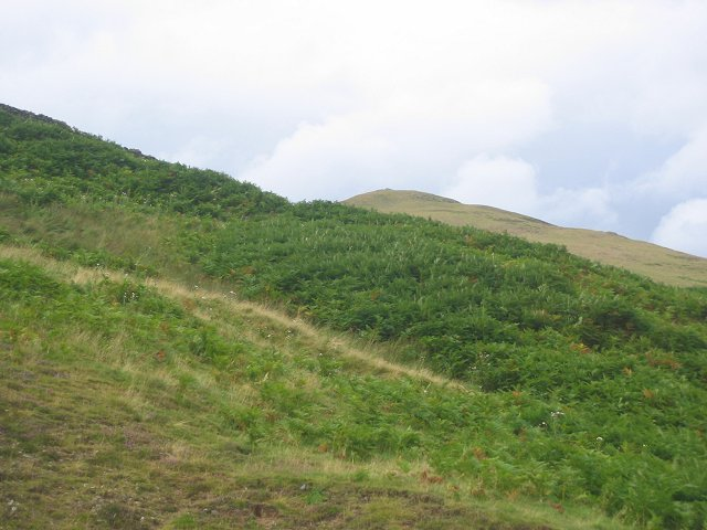 Bracken,  Meldon Burn