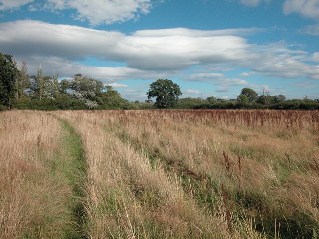 Rough Grass