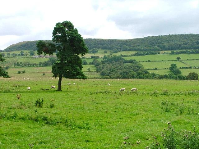 Pasture, Lund Farm