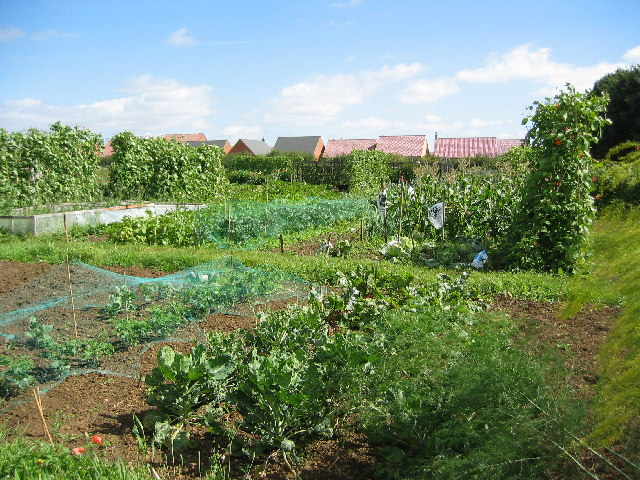 Allotment gardens on Leicester Road, Uppingham