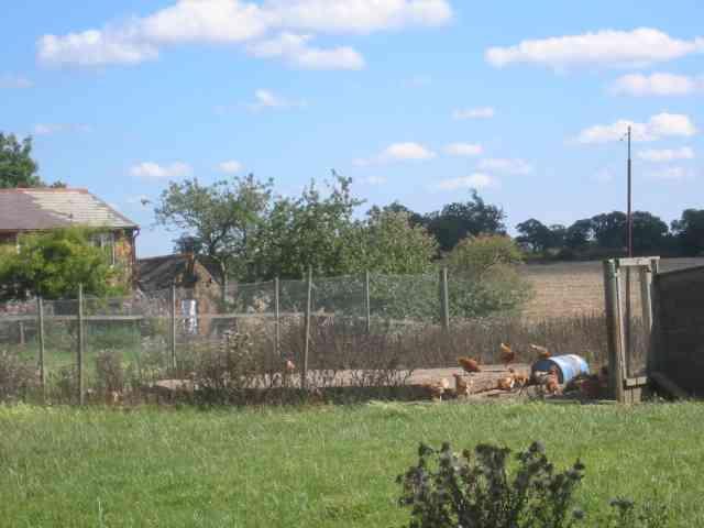 Hens in a pen near Someries Castle.