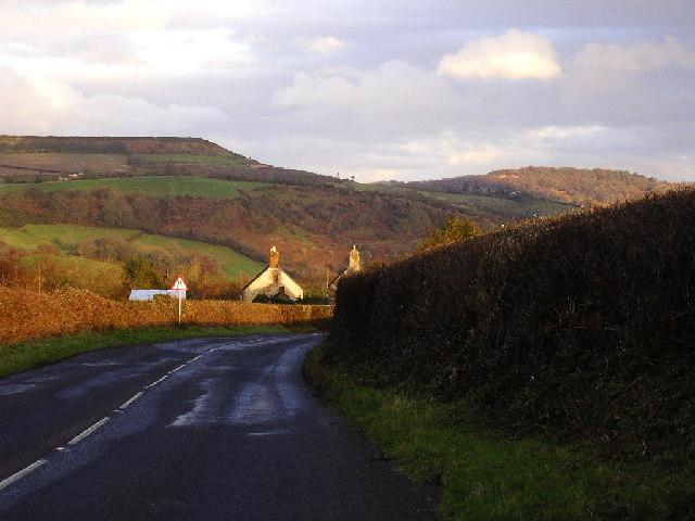 View from Marshwood showing Pilsdon Pen